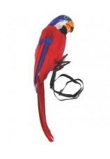 Perroquet en plumes pour pirates