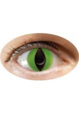 oeil de chat vert- lentilles 6 mois