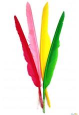 20 plumes colorees 25cm